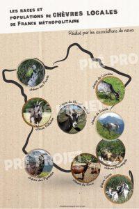 Préprojet poster des races de chèvres