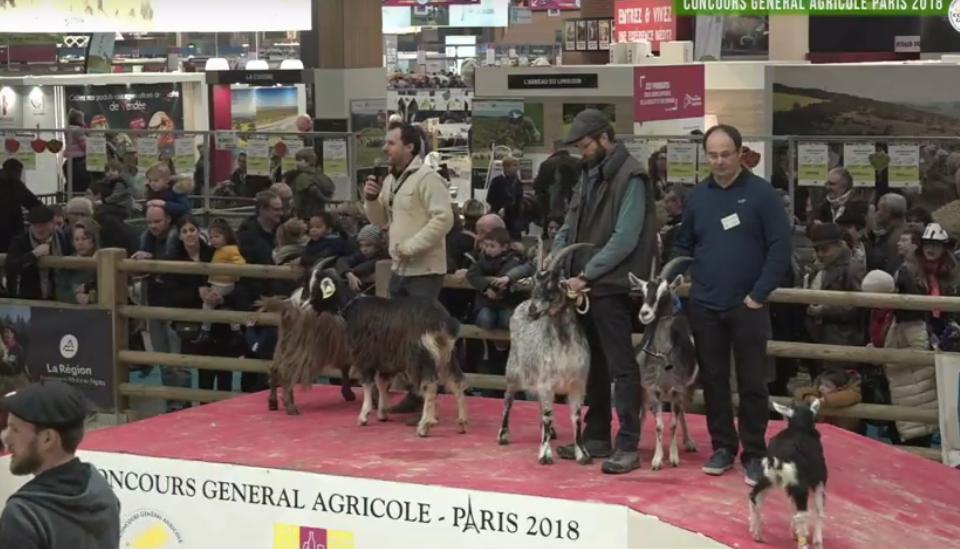 2018 SIA Chevres des Pyrénées (1)